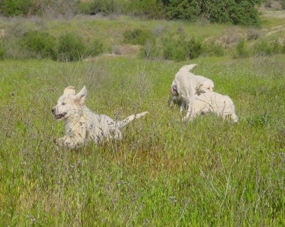 White Dove Ranch in the spring!